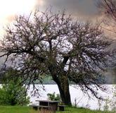Lago river Fotografia Stock Libera da Diritti