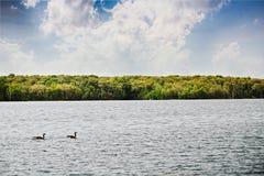 Lago river Fotografia Stock