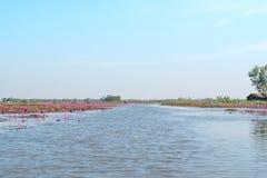 Lago rojo del campo del loto en el udonthani de Tailandia fotos de archivo
