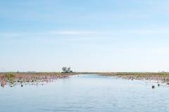 Lago rojo del campo del loto en el udonthani de Tailandia imagenes de archivo