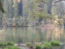 Lago rosso, Bicaz Fotografia Stock