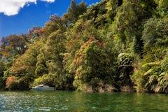 Lago Rotoiti, NZ fotografía de archivo libre de regalías