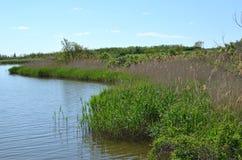 Lago rural com plantas Fotografia de Stock