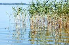Lago rushy summer fotografia de stock royalty free