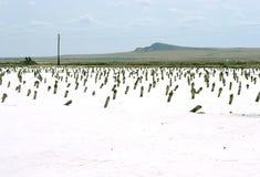 Lago salado Imagen de archivo libre de regalías