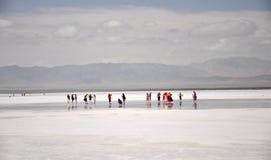 Lago salino de la tarjeta del té Fotos de archivo libres de regalías
