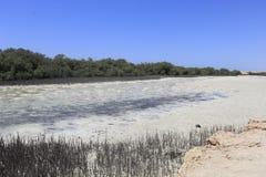 Lago salino, Ras Mohamed Nature Reserve, Qesm Sharm Ash Sheikh, Egitto fotografie stock libere da diritti