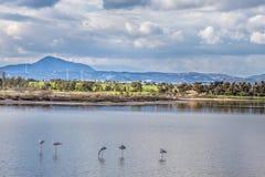 Lago salt com os flamingos perto de Larnaca, Chipre imagem de stock royalty free
