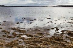 Lago salt nel deserto Immagini Stock Libere da Diritti
