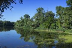 Lago salvaje del verano Fotografía de archivo libre de regalías