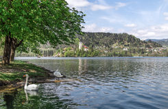 Lago sangrado em Eslovênia, primavera de 2015 Fotos de Stock