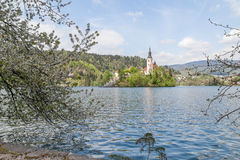 Lago sangrado em Eslovênia, primavera de 2015 Fotos de Stock Royalty Free