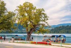 Lago sanguinato, Slovenia 25 agosto 2012 Le barche di legno sono sui turisti aspettanti della spiaggia Bella vista del lago e di  fotografia stock