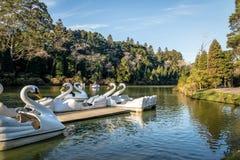 Lago-Schwarze-Black See mit Schwan-Tretbooten - Gramado, Rio Grande do Sul, Brasilien Lizenzfreie Stockfotos