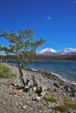 lago scuro freddo blu del Canada fotografia stock