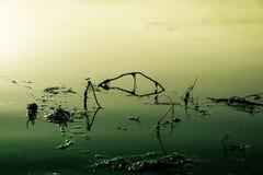 Lago se envenena y se contamina que Fotos de archivo libres de regalías