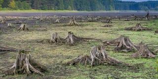 lago seco Fotografia de Stock Royalty Free