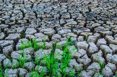 lago seco Foto de Stock Royalty Free