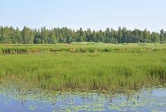 Lago Sestroretsky Razliv wetland imagens de stock royalty free