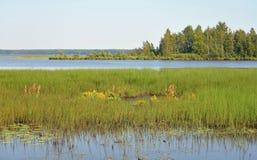 Lago Sestroretsky Razliv wetland foto de stock