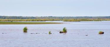 Lago Sestroretsky Razliv wetland fotos de stock