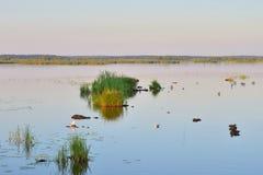 Lago Sestroretsky Razliv wetland no por do sol imagem de stock royalty free