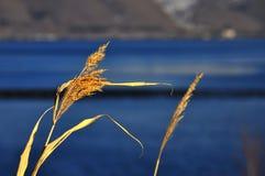 Lago Sevan Foto de Stock