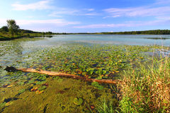 Lago Shabbona - Illinois. Fotografie Stock