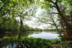 Lago Shiretoko Imágenes de archivo libres de regalías