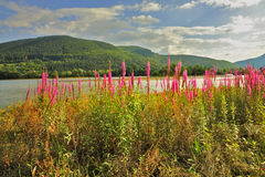 Lago silenzioso Charming Fotografia Stock Libera da Diritti