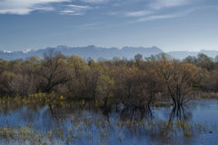 Lago Skadar Immagine Stock Libera da Diritti