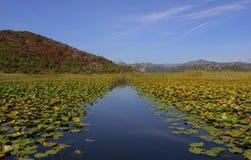 Lago Skadar Fotografie Stock