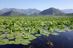 Lago Skadar, Montenegro immagine stock