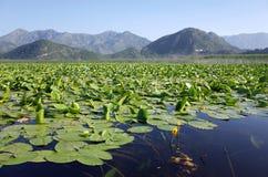 Lago Skadar, Montenegro imagem de stock