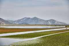 Lago Skadar Parque nacional montenegro verão foto de stock