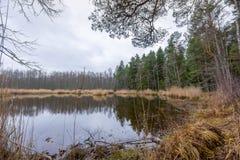 Lago Slokas na região de Kemeri Imagem de Stock