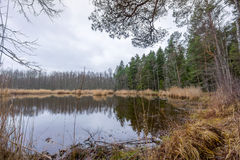 Lago Slokas nella regione di Kemeri Immagine Stock
