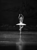 Lago solo swan di Lakeside-balletto del cigno del cigno- fotografia stock