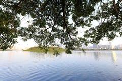 Lago sotto la tonalità degli alberi Fotografie Stock Libere da Diritti