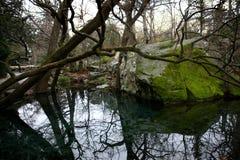 Lago spring Fotografia de Stock Royalty Free