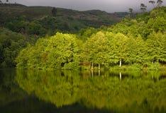 Lago spring Fotos de archivo libres de regalías