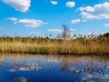 Lago spring Immagine Stock
