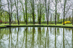 Lago spring, alberi verdi Fotografie Stock