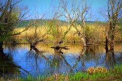 Lago Srebarna, Bulgaria Fotografia Stock Libera da Diritti