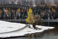 Lago St Moritz no outono Foto de Stock