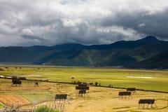 Lago stagionale coperto di erba verde e di fieno giallo Fotografia Stock
