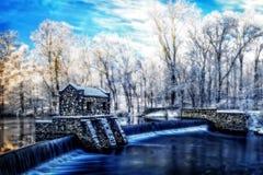 Lago storico e cadute speedwell durante l'inverno Fotografie Stock Libere da Diritti
