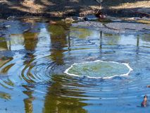 Lago sujo contaminado que borbulha dos gás abaixo da superfície imagens de stock royalty free