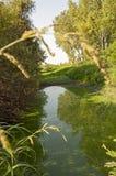 Lago sul prato Fotografia Stock Libera da Diritti
