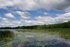 Lago summer Fotografie Stock